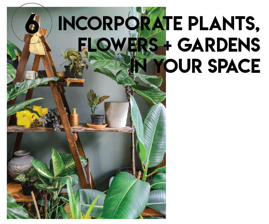 plants for holistic space